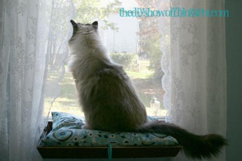 diy cat window perch and diy project parade