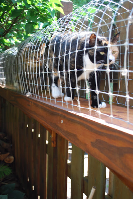 DIY outdoor cat walk
