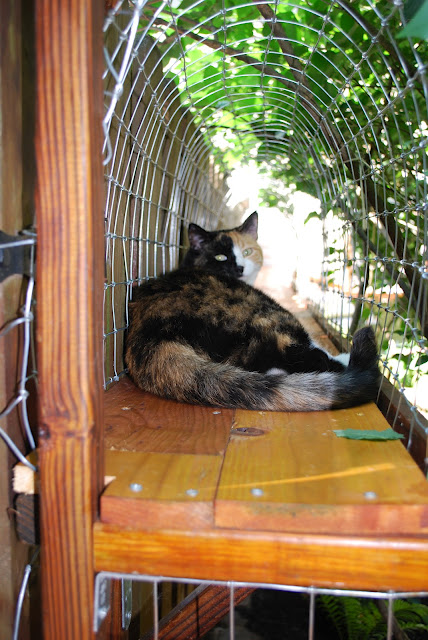 DIY outdoor cat tunnel