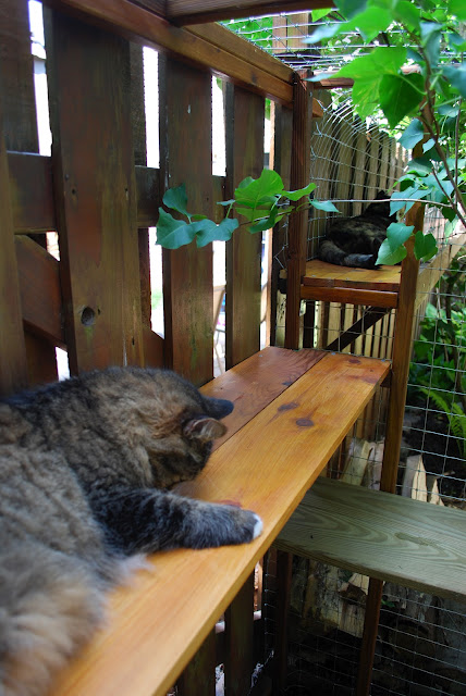 DIY outdoor cat tunnel