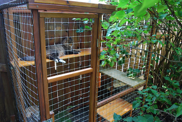 DIY outdoor cat cage