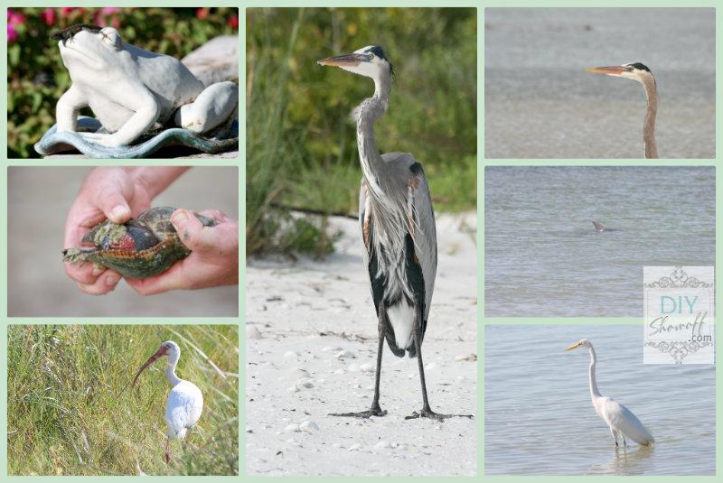 Fort Myers Beach wildlife
