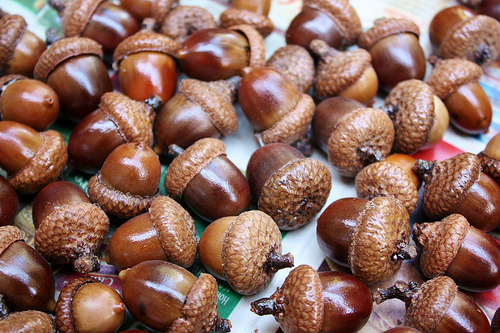tips for drying acorns
