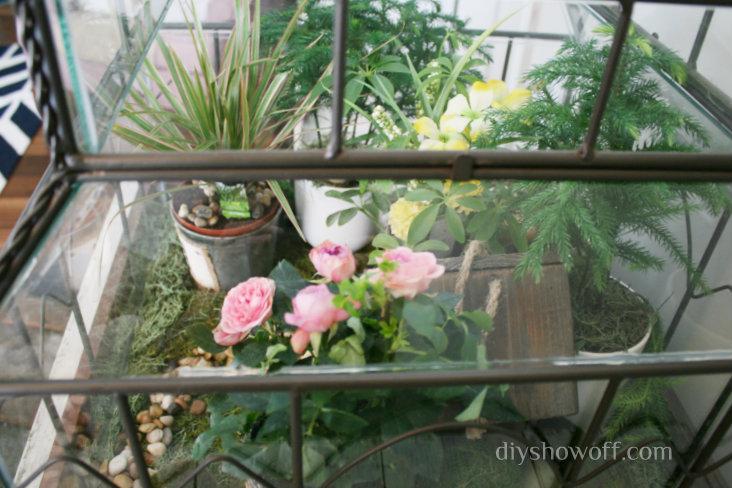 glass-terrarium