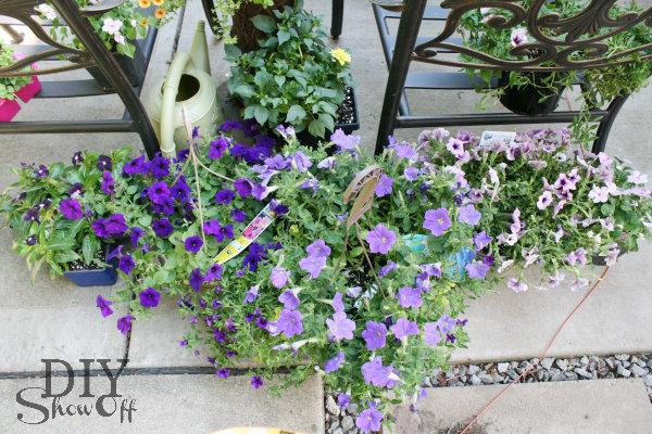 purple ombre flowers