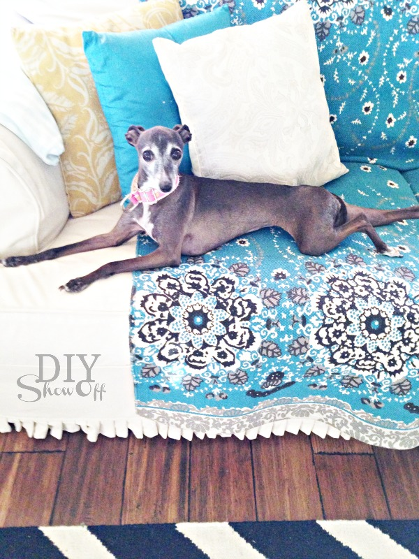 rosie italian greyhound
