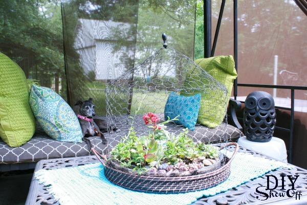 succulent patio garden