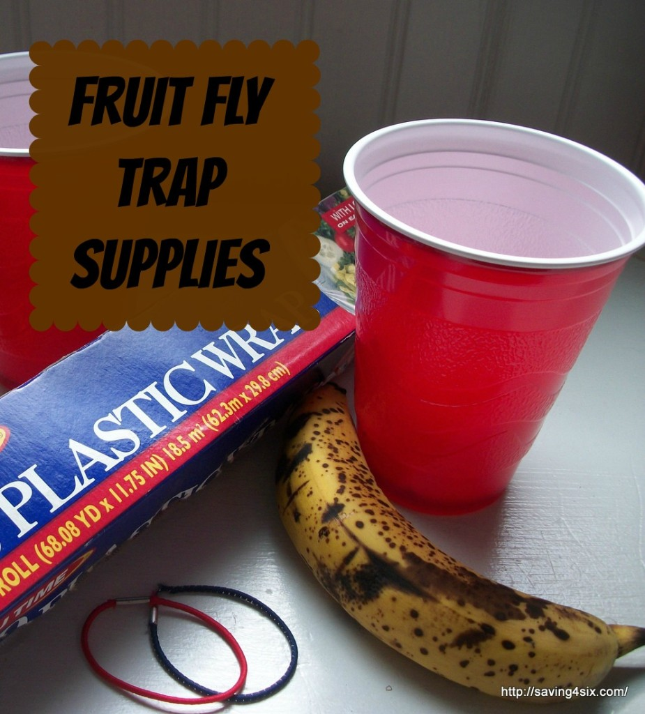 Fruit-Fly-Trap-Supplies at Saving 4 Six