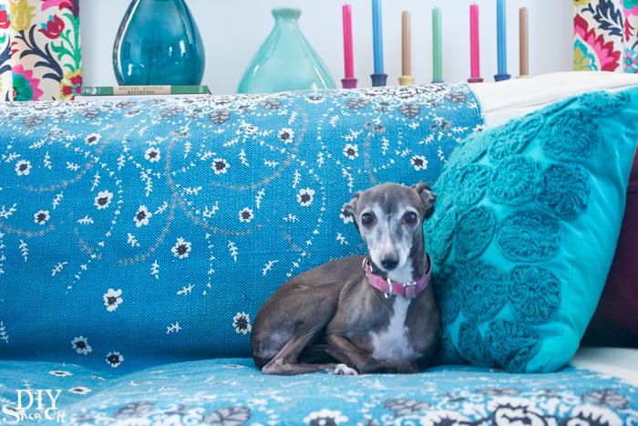 Italian Greyhound Rosie