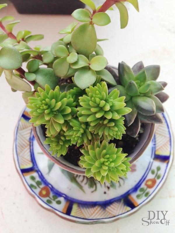 succulent planters - diyshowoff.com