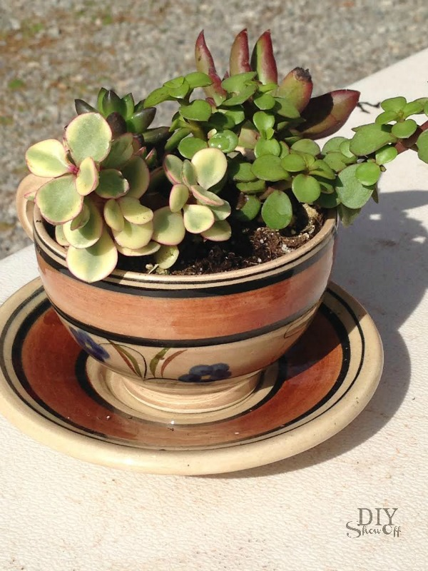 succulent teacup tutorial at diyshowoff.com