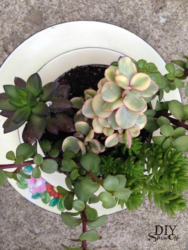 succulents - diyshowoff.com
