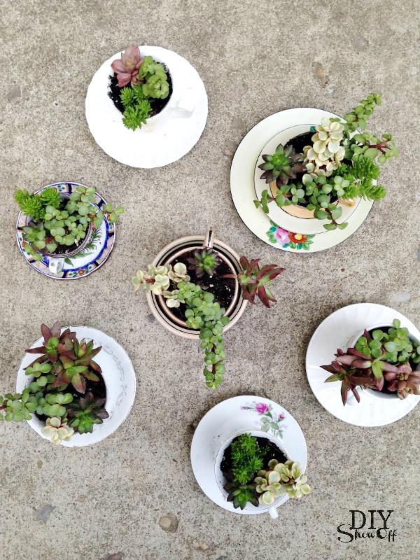 tea cup planters - diyshowoff.com