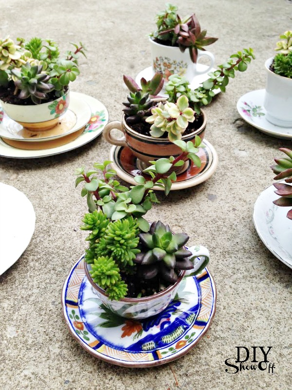 tea cup succulent planters diy show off diy decorating and