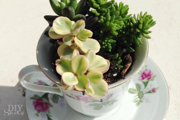 tea cup succulent planters - diyshowoff.com