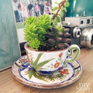 tea cup succulent planters at diyshowoff.com
