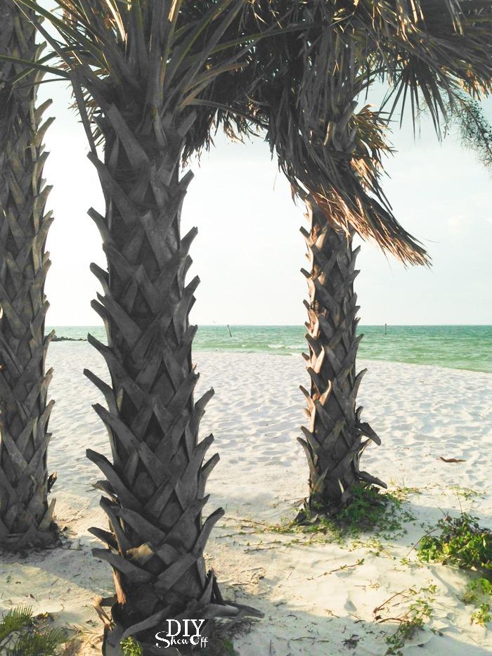 Anna Maria Island palm trees