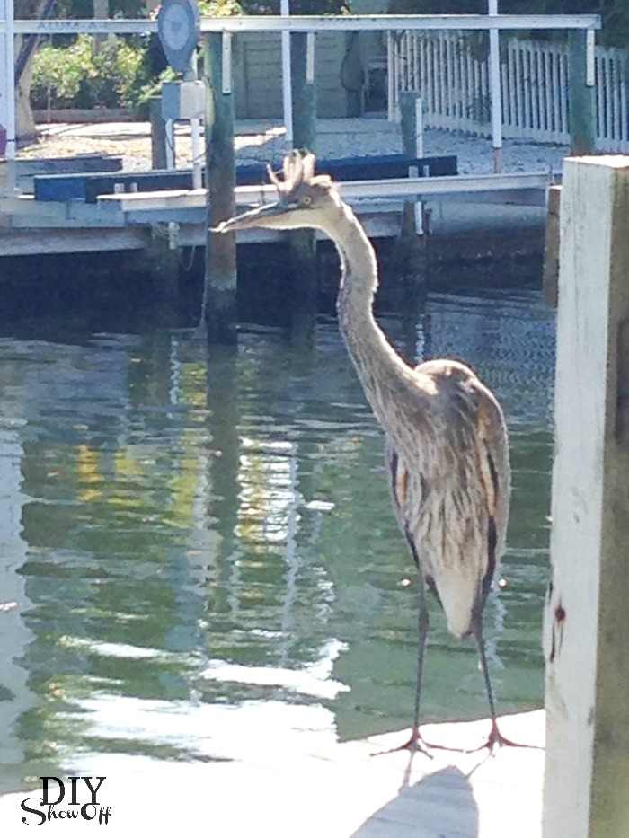 on the dock at Sirenia Cove