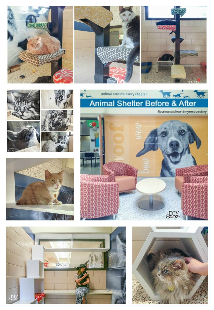 Animal Humane Society Makeover #myrescuestory #purinacatchow @purinacatchow @diyshowoff