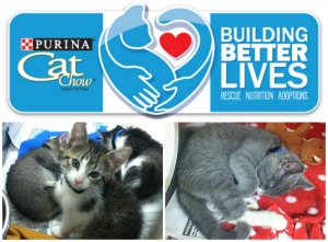 #buildingbetterlives #purinacatchow #diyshowoff