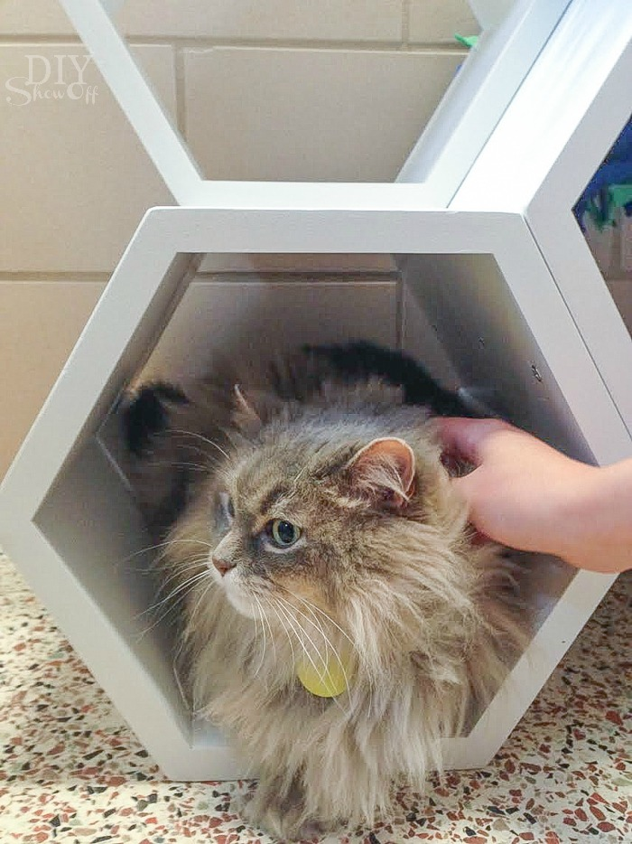 cat hexagon cubby shelves