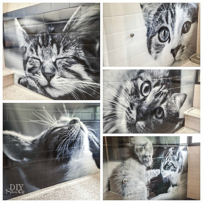cat wall murals