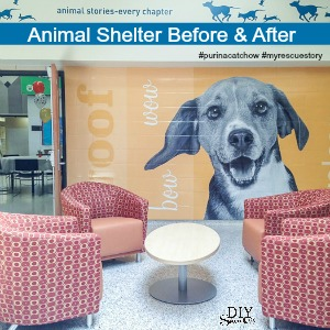 Animal Humane Society before & after makeover #purinacatchow #myrescuestory @purinacatchow @diyshowoff