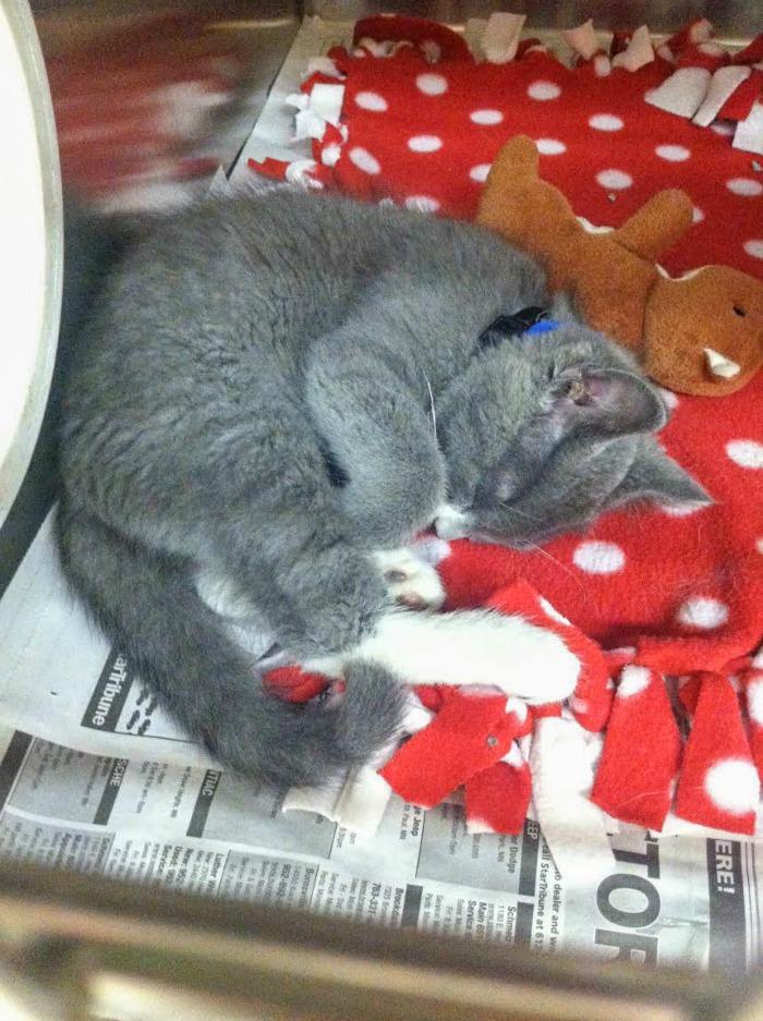kitten #myrescuestory #purinacatchow