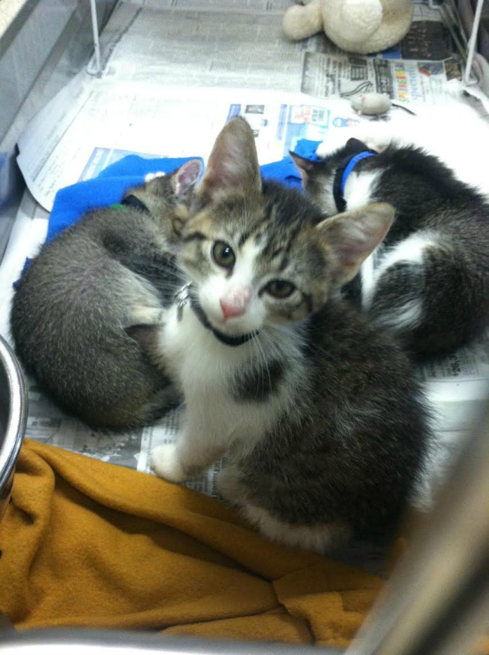 kittens - #purinacatchow #buildingbetterlives