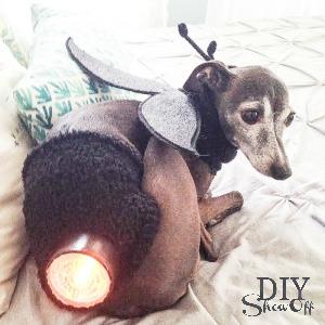 DIY Halloween lightning bug dog costume #michaelsmakers @diyshowoff