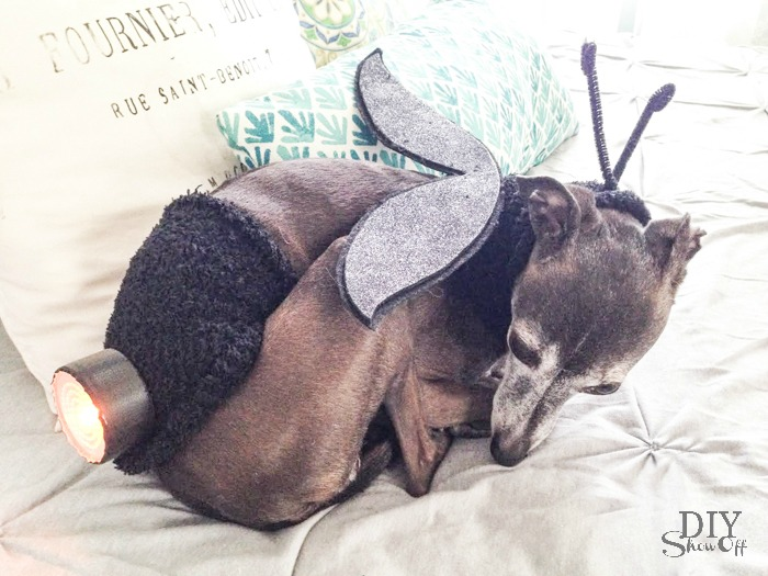 lightning bug halloween dog costume tutorial at diyshowoff #michaelsmakers