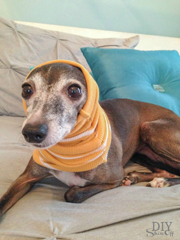 Easiest No Sew Small Dog Snood Infinity Scarf Tutorial