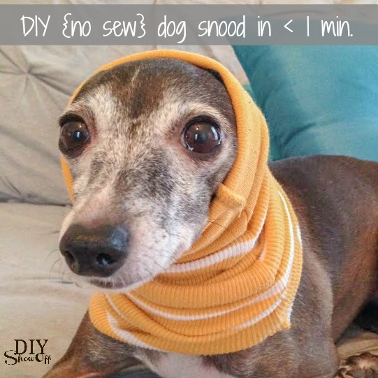 DIY (no sew) small dog snood infinity scarf in less than 1 minute! @diyshowoff