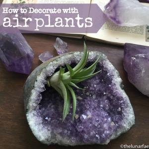 decorating with airplants #thelunarfae @diyshowoff