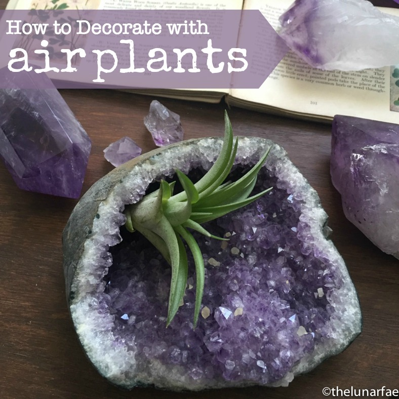 decorating with airplants #thelunarfae @diyshowoff