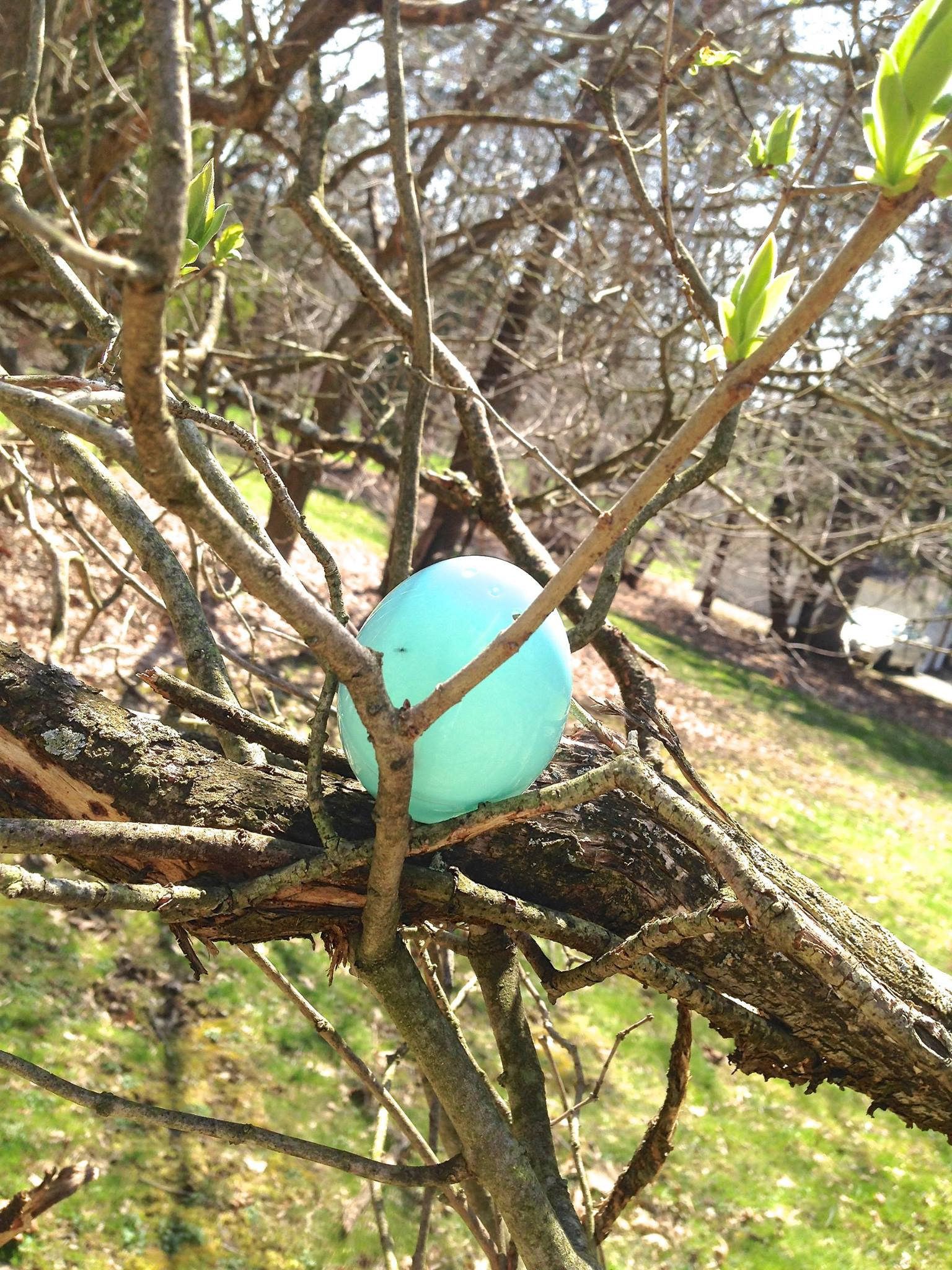 Easter egg hunt @diyshowoff
