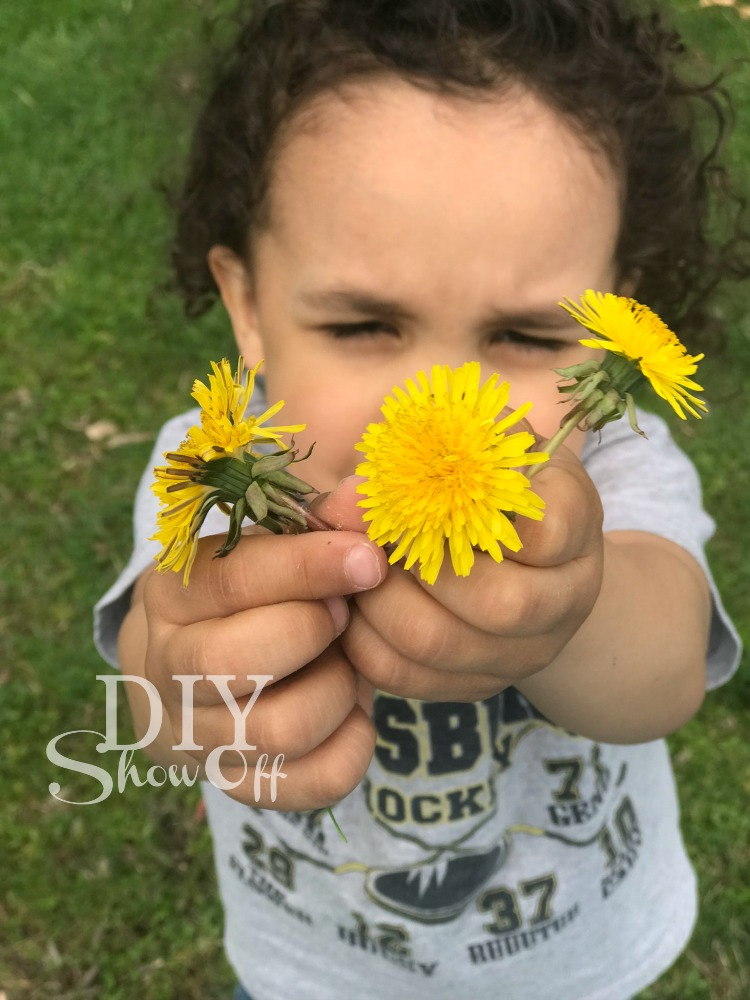 diyshowoff dandelions
